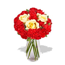 Carnation Delight: Anniversary Gift Delivery in Australia