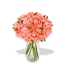 Pink Carnation: Sending Flowers to Australia