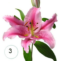3 Lilies of Affection BEH: Send Gifts to Bahrain