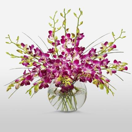 Purple Orchids in Vase
