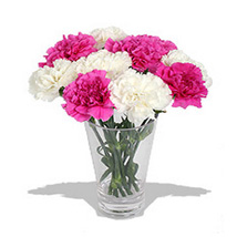 10 Pink n White Carnations in Vase: Send Anniversary Gifts to Toronto
