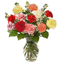 12 Multi color Carnations in Vase: Send Anniversary Gifts to Toronto