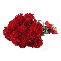 12 Red Carnations: Flower Delivery in Edmonton