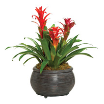 Bromeliad Beauty: Send Anniversary Gifts to Toronto