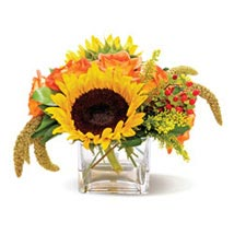 Country Sunflowers CND: I am Sorry Flowers to Canada