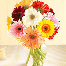 Multi Color Gerberas in Vase: Flower Delivery in Edmonton