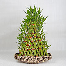 Exotic 8 Layer Lucky Pyramid Bamboo Plant: Gifts for Anniversary