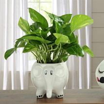 Freshen Up Money Plant: I Am Sorry Gifts
