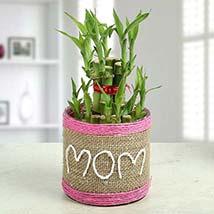 Innate Beauty: Plants