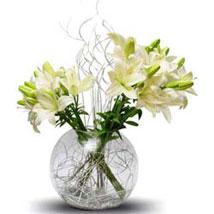Lily celebration: Premium Gifts