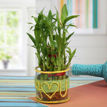 Love For Lucky Bamboo: Anniversary Gifts