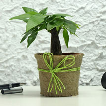 Lucky Money Tree: Send I Am Sorry Gifts