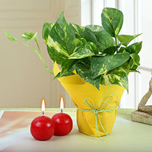Money Plant with Red Candle Balls: Diwali Gifts