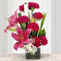 Serene Carnation: Send Flowers to Delhi