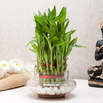 Three Layer Bamboo Good Luck Terrarium: Plants Delivery