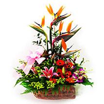 Gerberas Basket Arrangement: Lilies to Malaysia