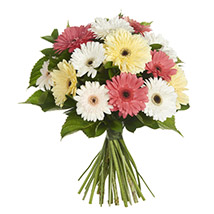 Daisy Gerbera Bouquet: Send Birthday Gifts to New Zealand