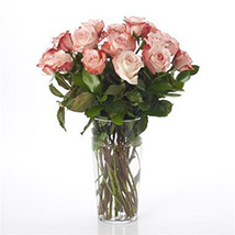 Elegant Powder Pink Roses: Flowers to Hamilton