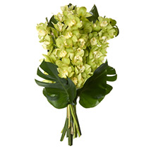 Fresh Orchids Bouquet: Send Gifts to Hamilton