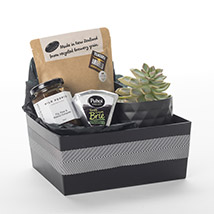 Succulent N More: Birthday Gifts to New Zealand