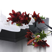 Wistful Red Lilies: Send Flower Bouquets to New Zealand