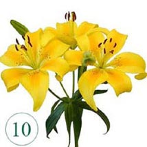 10 Blooms of Yellow Lilies OM: Oman Gift Delivery