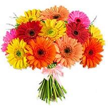 Crazy Daisy oma: Flowers to Oman