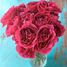 Desire: Send Carnations to Philippines