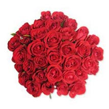 12 Red Roses in Cellophane SA: South Africa