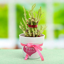 Good Luck Mom: Buy Plants in Dubai, UAE