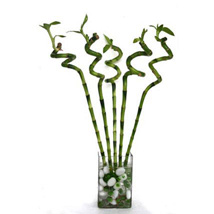 Spiral Bamboo: Wedding Gifts Dubai
