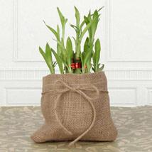 Symbol For Wealth: Plants to UAE