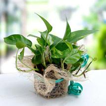 Thoughts Of U: Buy Plants in Dubai, UAE
