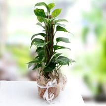 Utmost Perfection: Plants to UAE