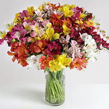 32 British Alstroemeria: Send Anniversary Gifts to London