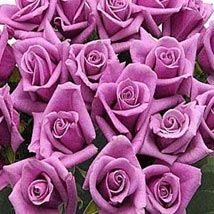 100 Long Stem Lavender Roses: Send Roses to USA
