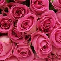 100 Long Stem Pink Roses: Flowers to Miami