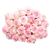 25 Long Stem Pink Roses: Birthday Gifts Los Angeles