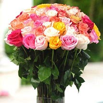 36 Multicolor roses in Vase: Send Flowers to Miami