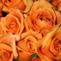 50 Long Stem Orange Roses: Send Flowers to San Jose