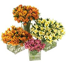 50 Peruvian Lilies: Send Wedding Gifts to USA