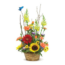 Butterfly Garden USA: Mixed Flowers in USA