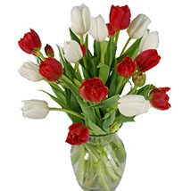Christmas Mixed Tulips: Christmas Flowers USA