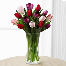 Deluxe Tender Tulips Bouquet: Birthday Gifts to USA