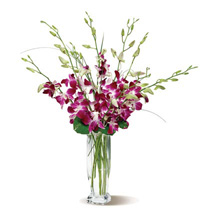 Dendrobium Orchids: Send Anniversary Flowers to USA