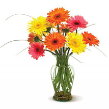 Happy Gerberas: Send Anniversary Flowers to USA
