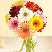Multi Color Gerberas in Vase: Flowers to Miami