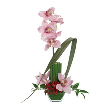 Opulent Orchids: Send Anniversary Gifts to USA