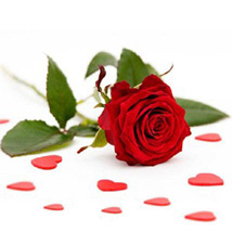 Single Red Roses: Send Gifts to Plano